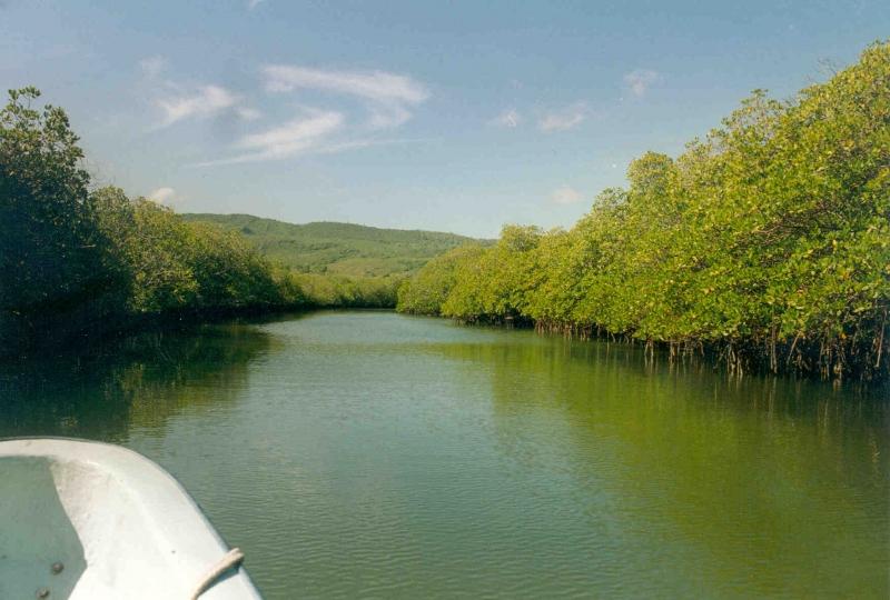 Haitianische Grenze - Mangroven