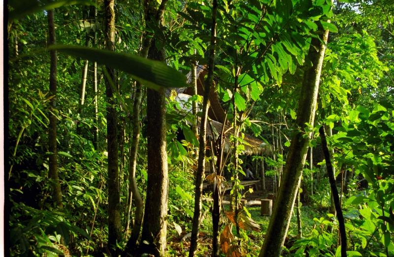 Dschungeltour