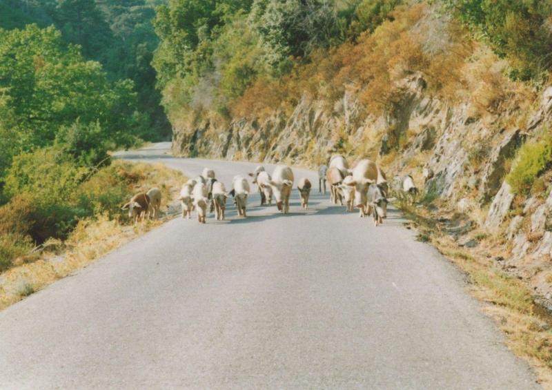 Nationalpark - Schweineangriff