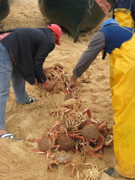 Krebsfang am Strand Oualidia