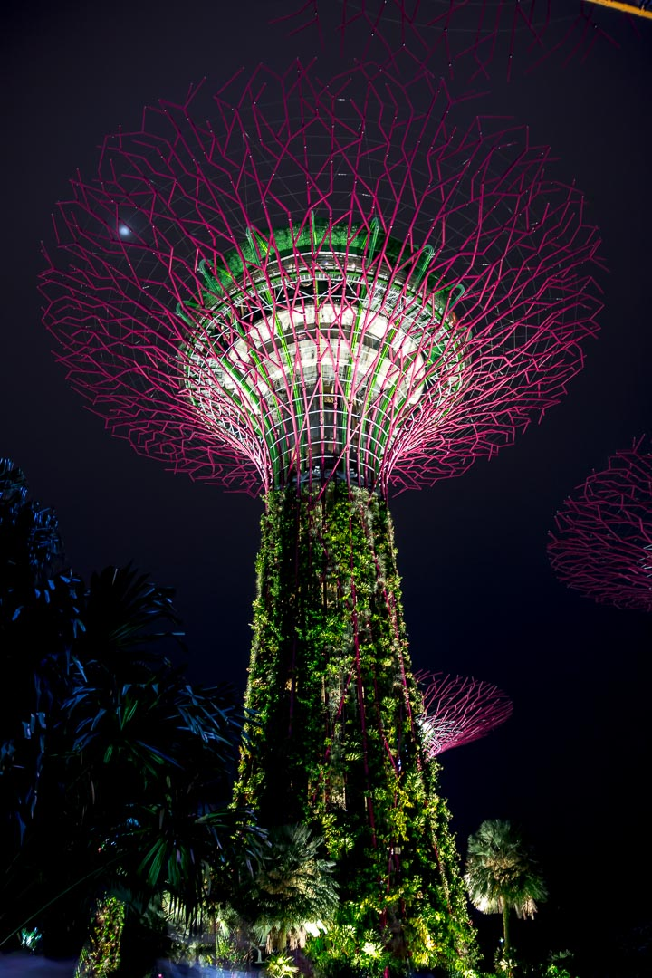 Super Tree Grove, Singapur