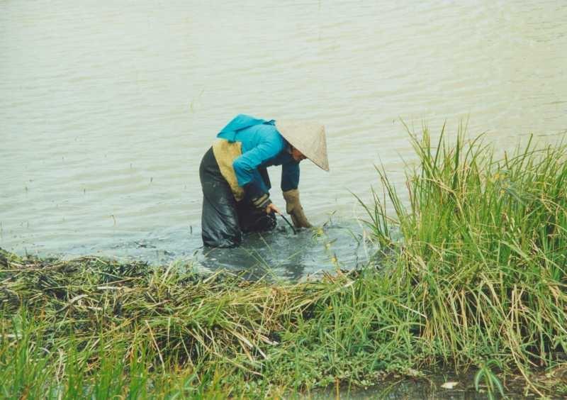 Mekong Delta - Arbeitende Frau