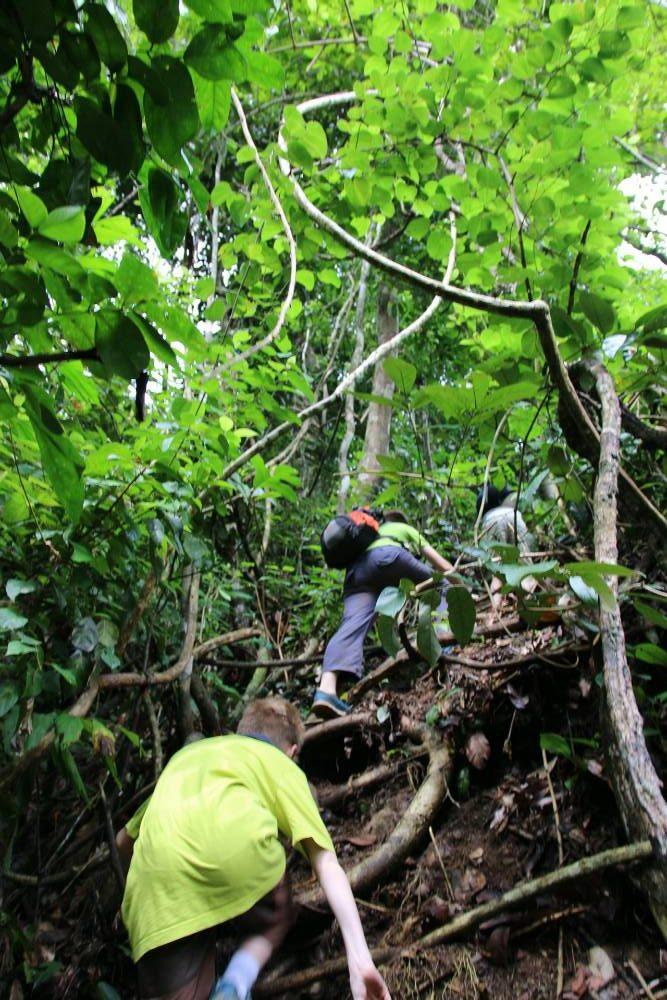 Bukit Lawang - Aufstieg in den Dschungel