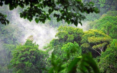 Mit Termiten-Lotion durch den Dschungel