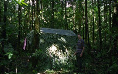 Im Dschungel verlaufen