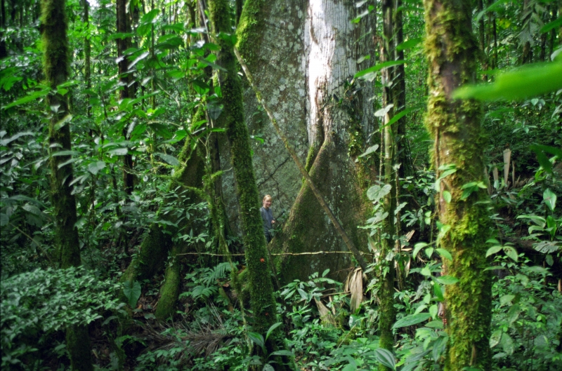 Fast Hitzschlag auf der Dschungeltour in den Amazonas