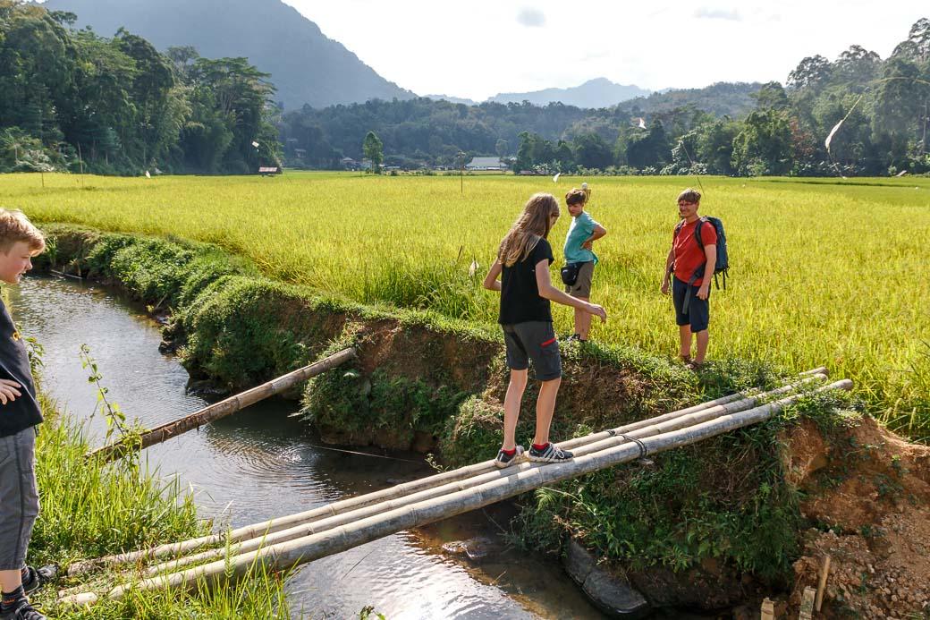 Wanderung durch Reisfelder von Kete Kesu nach Londa