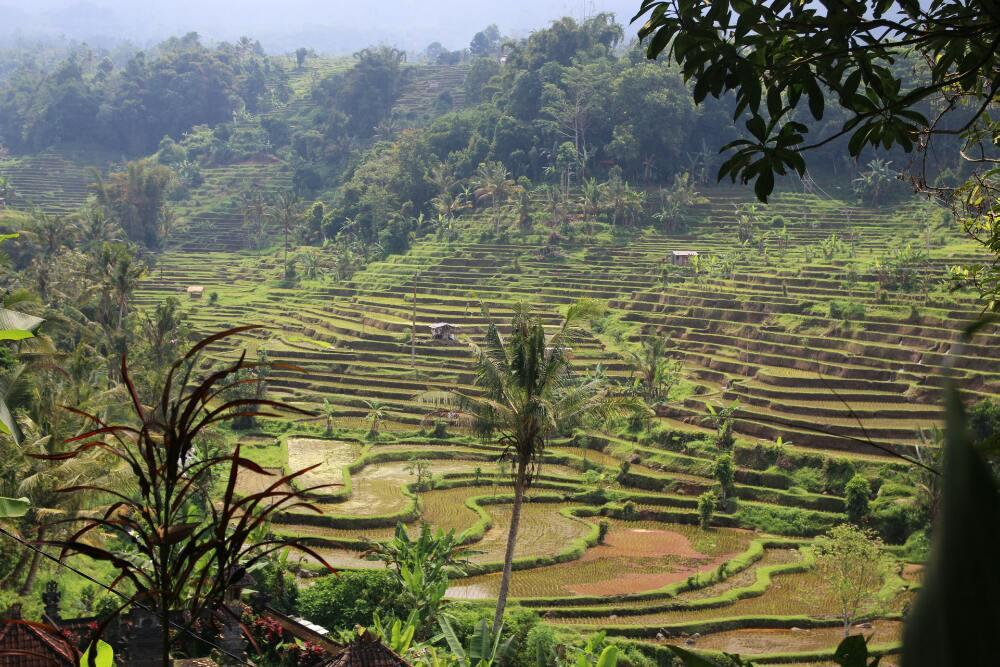 Die schönsten Reisterrassen Balis