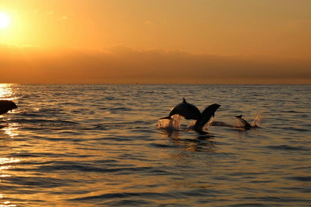 Bootstour mit Delfinen