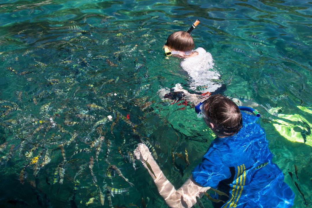 Schnorcheln mit Fischen, Pulau Tulai vor Pulau Tioman
