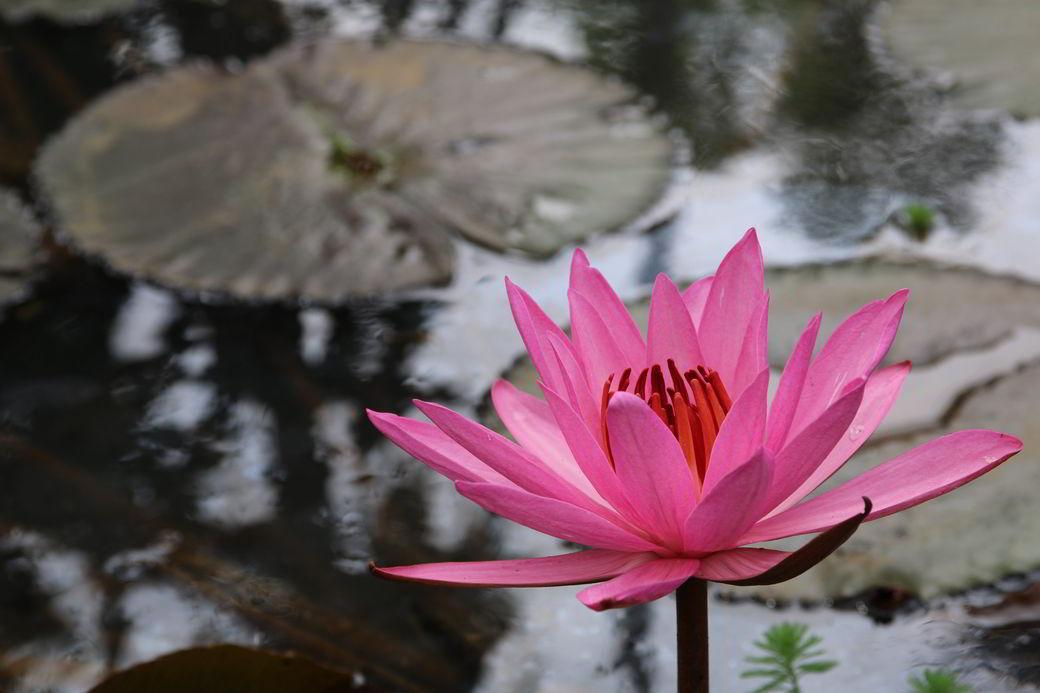 Minahasa Tomohon Blumengarten