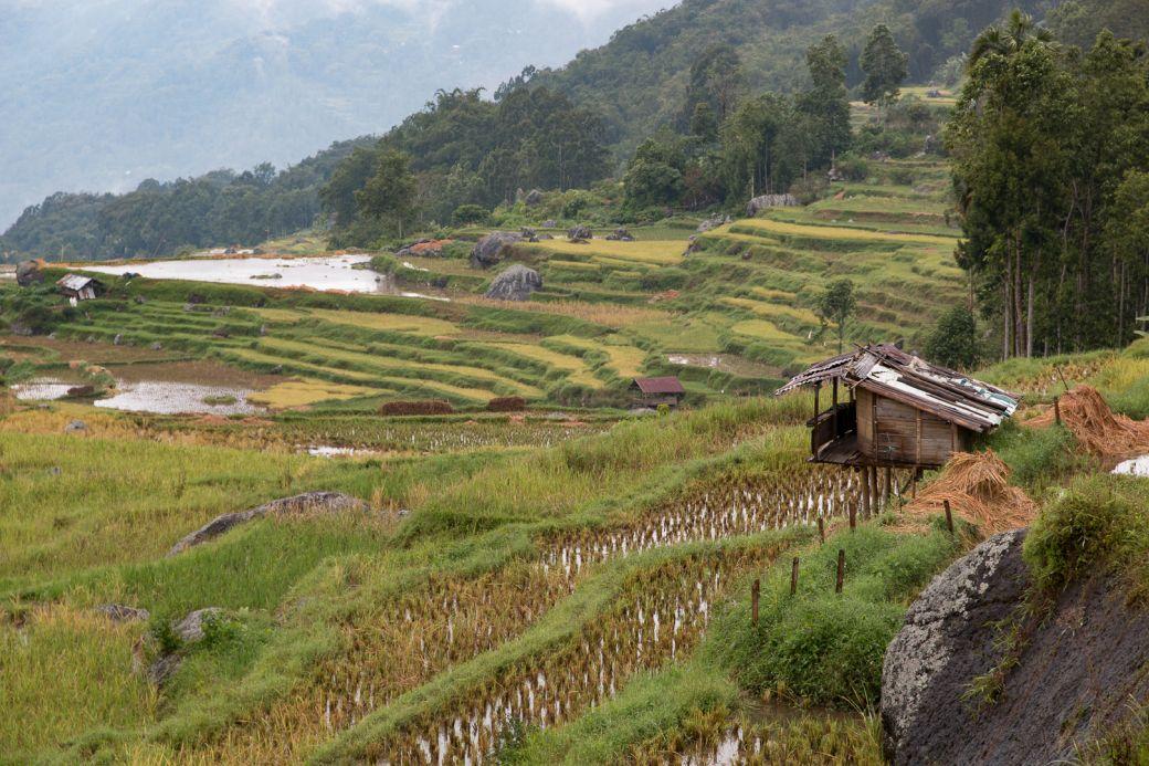 Sulawesi Batutumonga