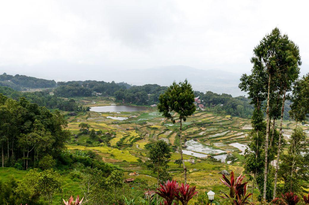Schöne Wanderung von Batutumonga nach Rantepao
