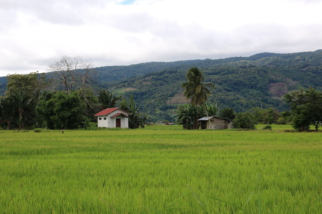 Tentena Reisfelder