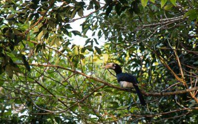 Der Nashorn-Vogel-Wecker