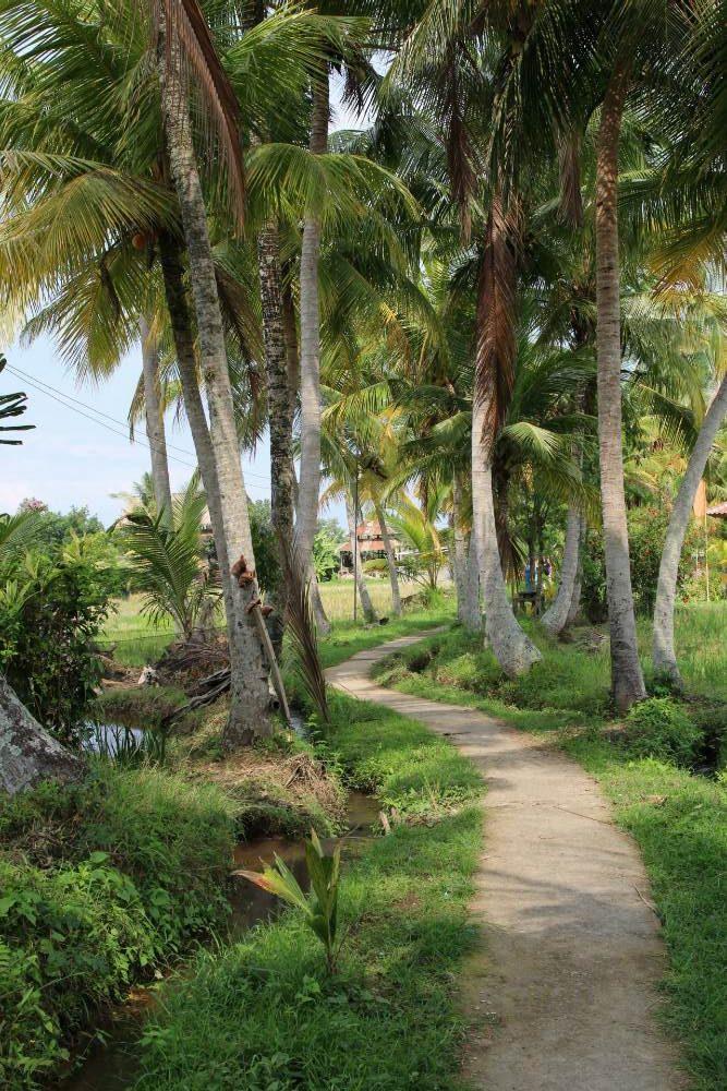Ubud - Wanderung durch Reisfeld