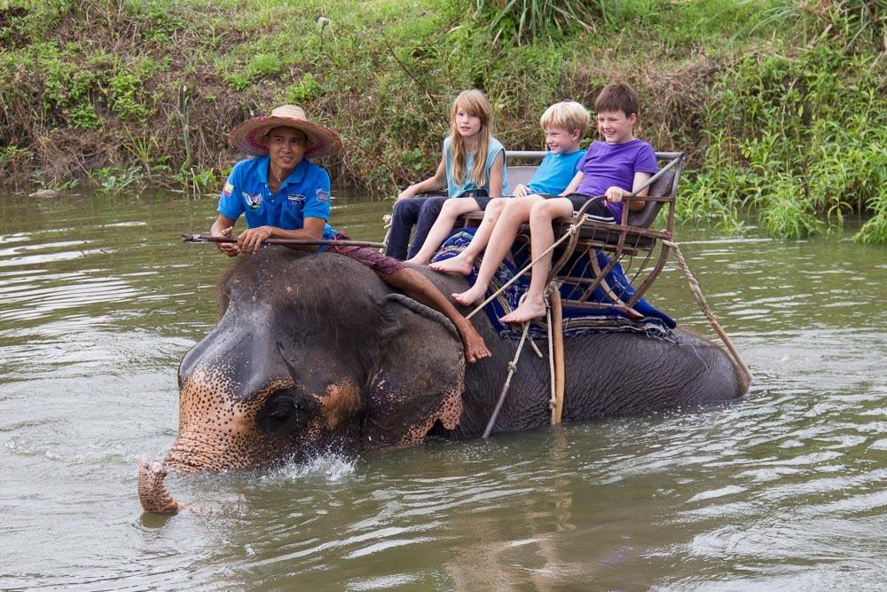 Von Würfelquallen und Elefanten